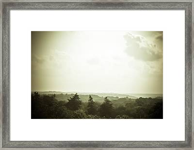 The Pines Framed Print by Jason Heckman