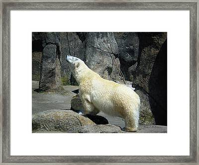 The Polar Pose Framed Print