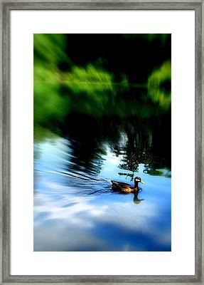 The Pond - Central Park Nyc Framed Print by Maria Scarfone