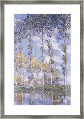 The Poplars Framed Print by Claude Monet