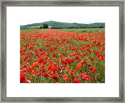 The Poppy Field Clonmel Framed Print