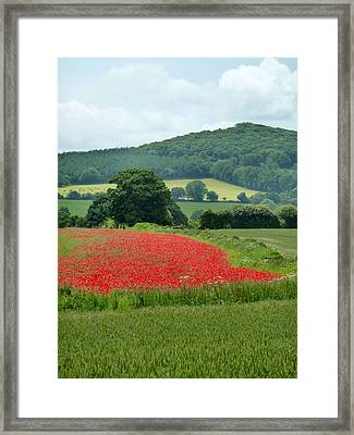 The Poppy Field. Framed Print