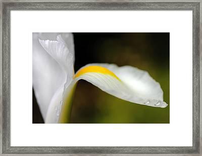 The Pose White Dutch Iris Flower  Framed Print by Jennie Marie Schell