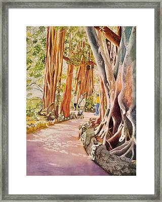 The Power Of The Banyan Framed Print by Terry Arroyo Mulrooney