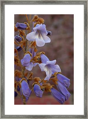 Framed Print featuring the photograph The Princess Flower by Paul Mashburn