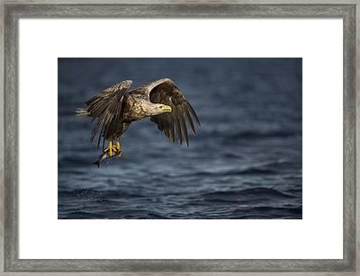 The Prize Framed Print by Andy Astbury