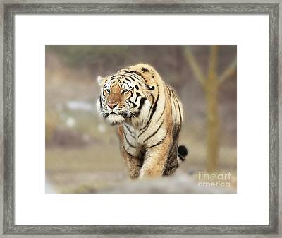 The Prowler Framed Print by Inspired Nature Photography Fine Art Photography