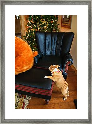 Framed Print featuring the photograph The Puppy Chase by Ann Murphy