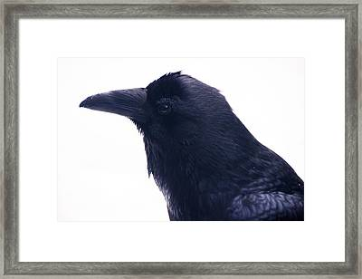 The Raven.  A Study In Black And White Framed Print