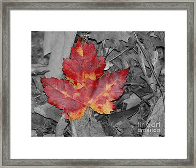 The Red Leaf Framed Print by Paul Ward