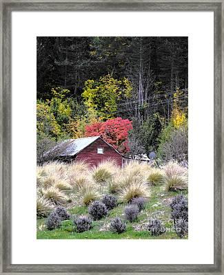 The Red Shed Framed Print by Karen Lewis