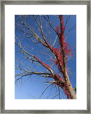 Framed Print featuring the photograph The Red Tree by Nick Mares