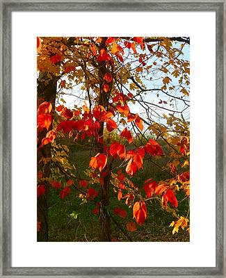 The Reds Of Autumn Framed Print