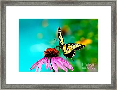 The Return Framed Print by Lois Bryan