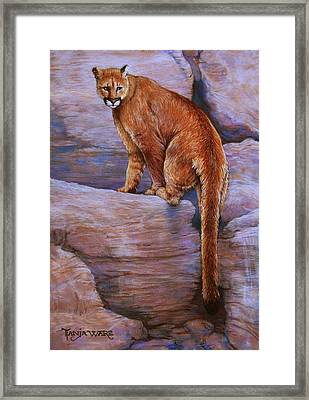 The Return Framed Print by Tanja Ware