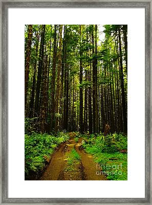 The Road Into The Green  Framed Print by Jeff Swan