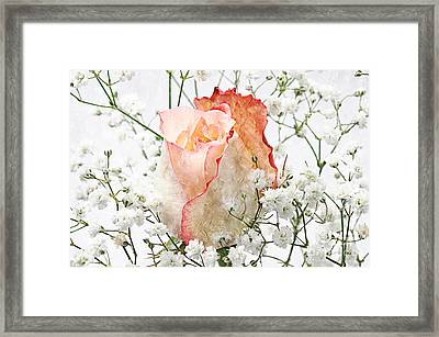 The Rose Framed Print by Andee Design