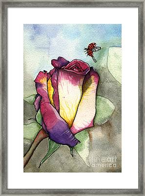The Rose Framed Print by Nora Blansett