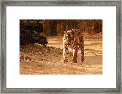 Framed Print featuring the photograph The Royal Bengal Tiger by Fotosas Photography
