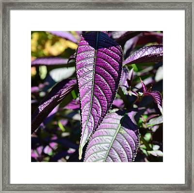 The Royal Leaf Framed Print by Mark Bowmer