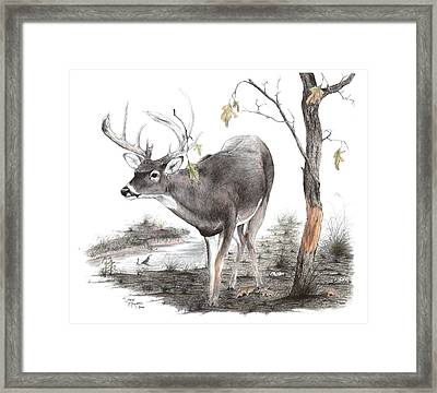 The Rubline Framed Print by Steve Maynard