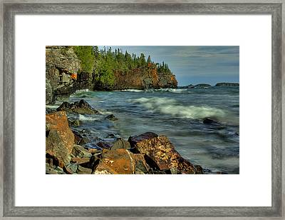 The Sea Lion Framed Print