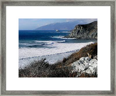 The Sea Squirrel Framed Print by Karen Wiles