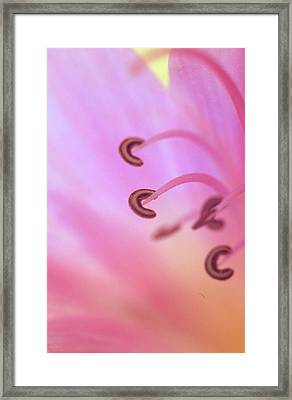 The Secret Life Of A Lily Framed Print by Kathy Yates