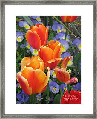 The Secret Life Of Tulips - 2 Framed Print by Rory Sagner