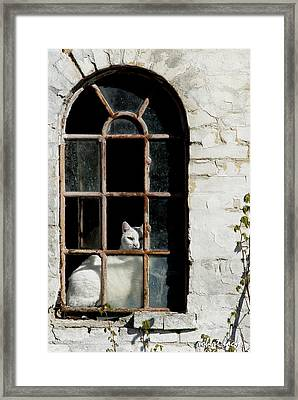 The Sentinal Framed Print