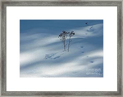 Framed Print featuring the photograph The Shadow Of Loneliness by Ausra Huntington nee Paulauskaite