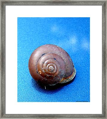 The Shell Of A Snail Framed Print