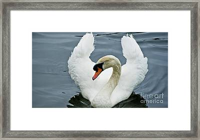 The Showoff Framed Print by Julie Clements