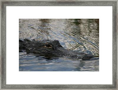 The Silent Killer Framed Print by Valia Bradshaw