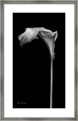 The Silver Calla Lily Framed Print by Georgiana Romanovna