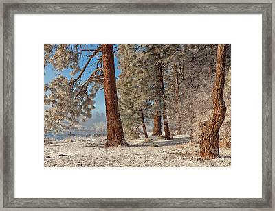 The Smell Of Pines II Framed Print