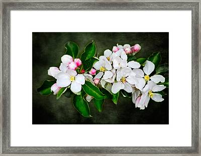 The Smell Off Spring Framed Print
