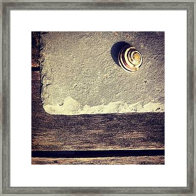 The Snail Framed Print by Nic Squirrell