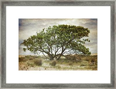 The Sound Of The Trees Framed Print by Paul Ward