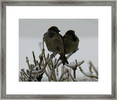 The Sparrows Framed Print by Mariana Robu
