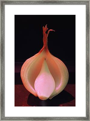 The Sprit Of The Onion Framed Print by Alfredo Da Silva