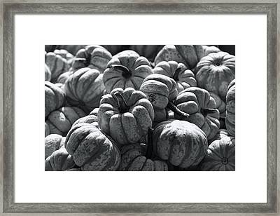 The Squash Harvest In Black And White Framed Print by Kathy Clark