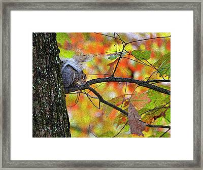 Framed Print featuring the photograph The Squirrel Umbrella by Paul Mashburn