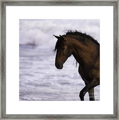 The Stallion And The Ocean Framed Print by Carol Walker