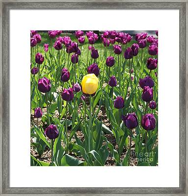Framed Print featuring the photograph The Stand Out by Julie Clements
