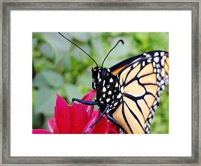 The Stare Framed Print by Katie Bauer