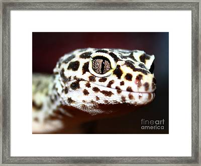 The Stare Framed Print by Rachel  Harris