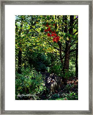 The Start Of Fall Color Framed Print by Ruth Bodycott