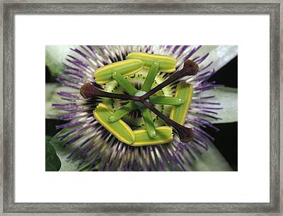 The Startling Petals And Stamen Framed Print