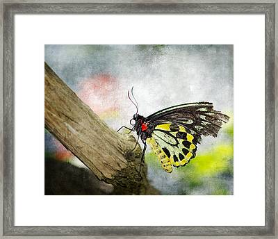 The Stillness Of A Butterfly Framed Print by Laura George